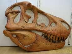 ティラノサウルスレプリカ|その他ブランド